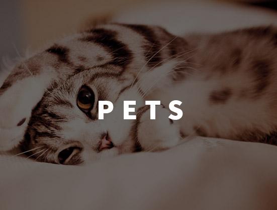 551x419_Pets